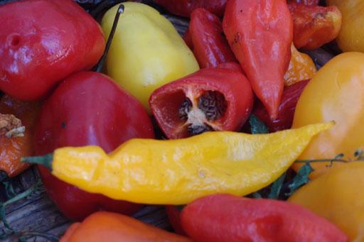 rote und gelbe Chilies